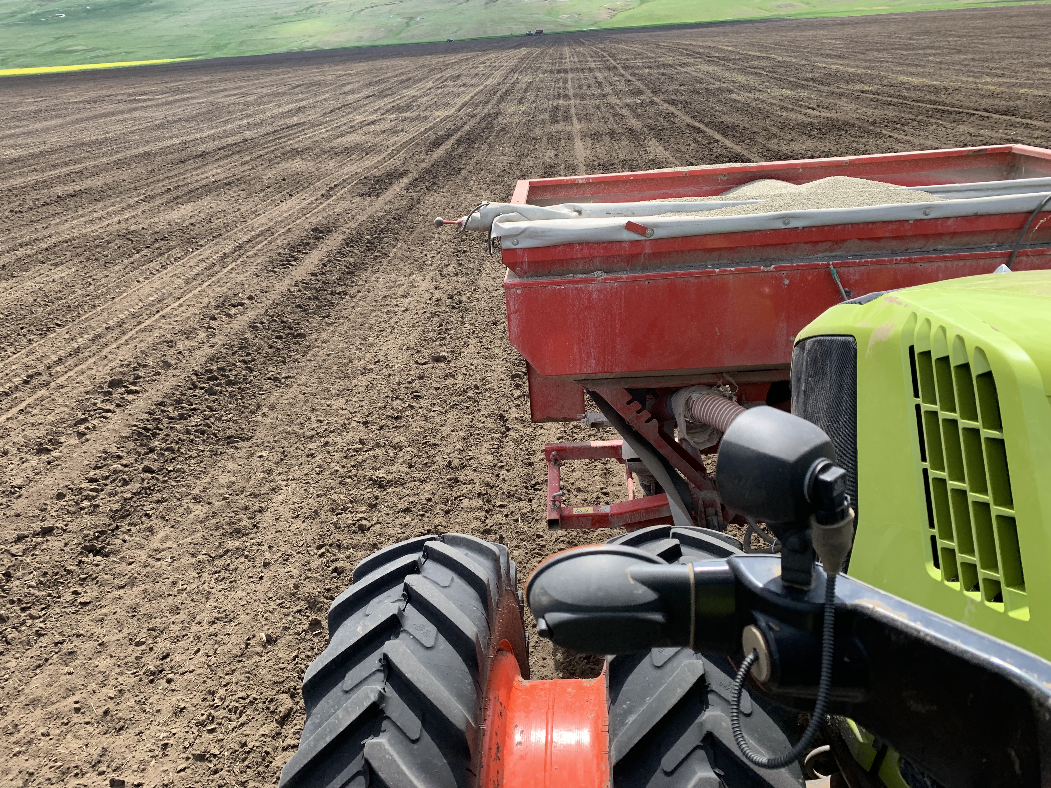 Corn sowing